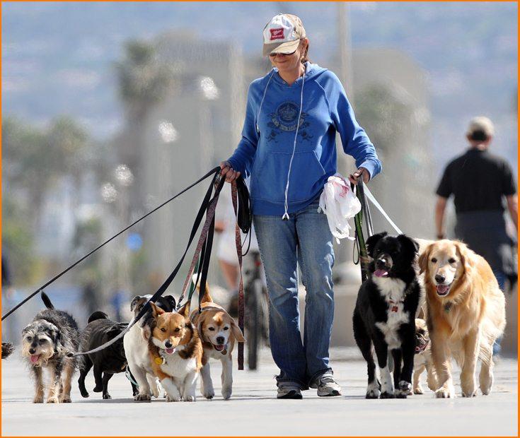 Cómo pasear varios perros a la vez