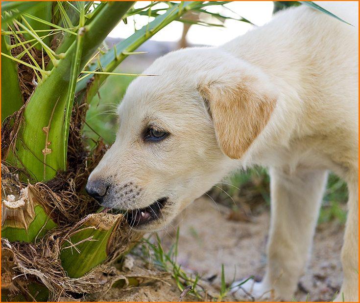 Cómo enseñar a un perro a no morder las plantas