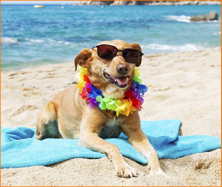 Cómo cuidar a mi perro en verano