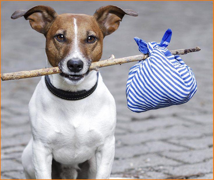 Cómo evitar que mi perro se pierda