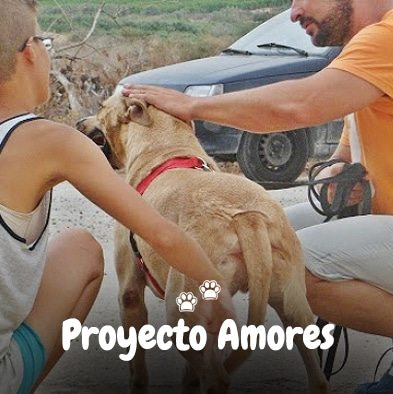 Proyecto Amores_2