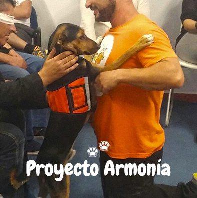 Proyecto Armonia_2