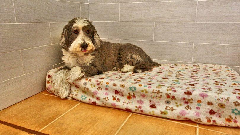 Amplios colchones para su perro