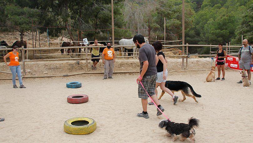 Parque para juegos de su perro