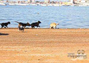 Ruta senderista canina en Lopagán Murcia