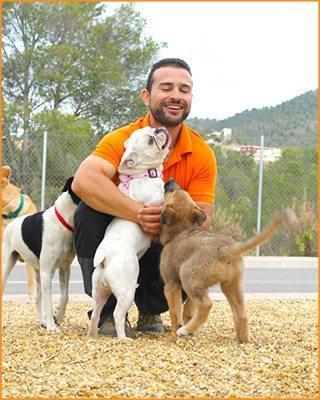 Servicio de educación canina a domicilio en Murcia