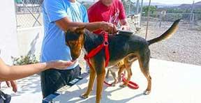 Educación canina para refugios y protectoras de animales