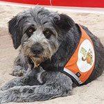 Formación canina profesional en Murcia