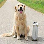 Residencia para perros en Murcia