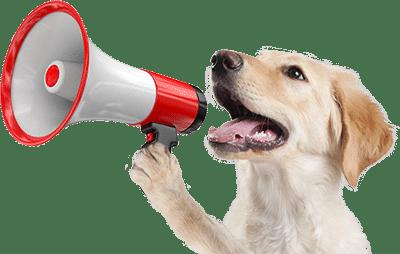 educador canino Murcia