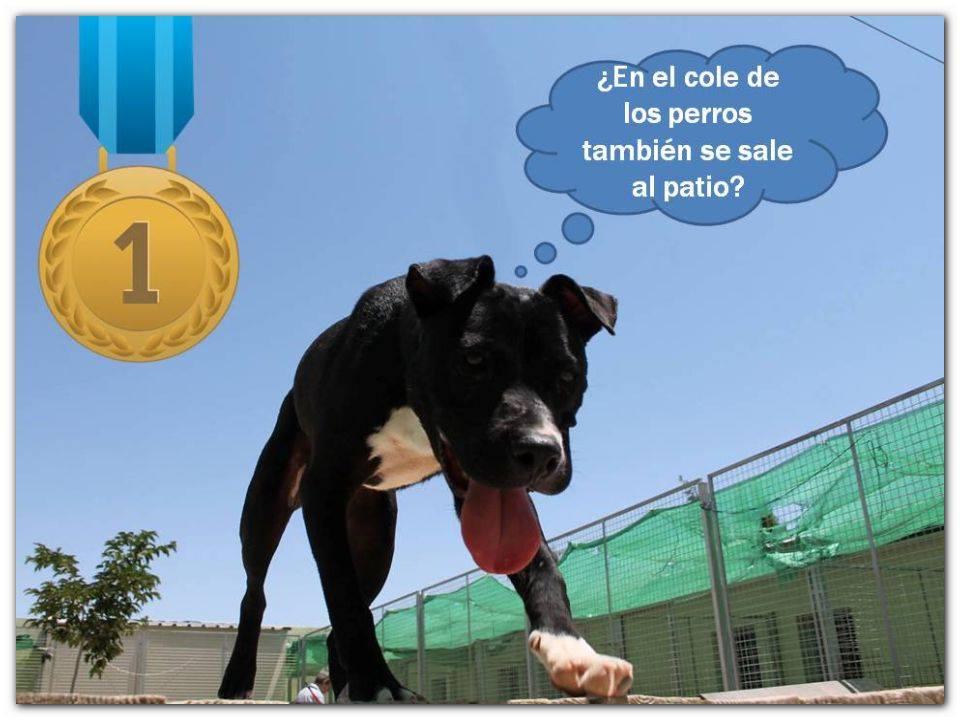 Proyecto Perros Potencialmente Perfectos - Mazinguer
