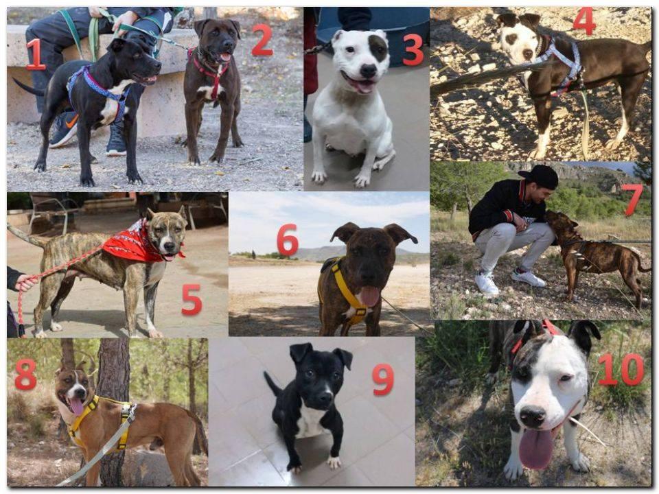 Proyecto Perros Potencialmente Perfectos