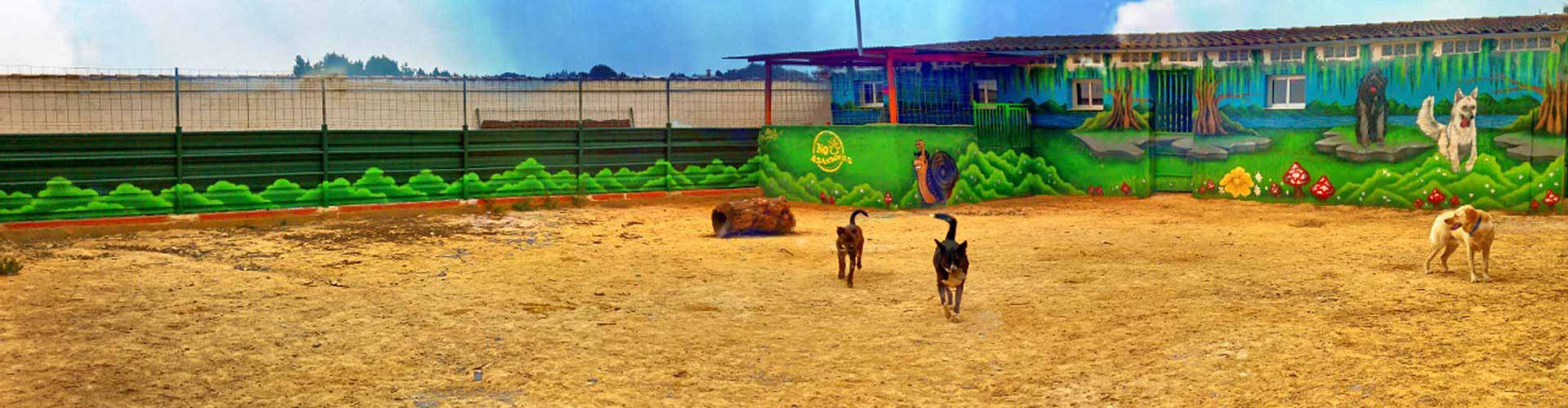 Guardería canina en Murcia