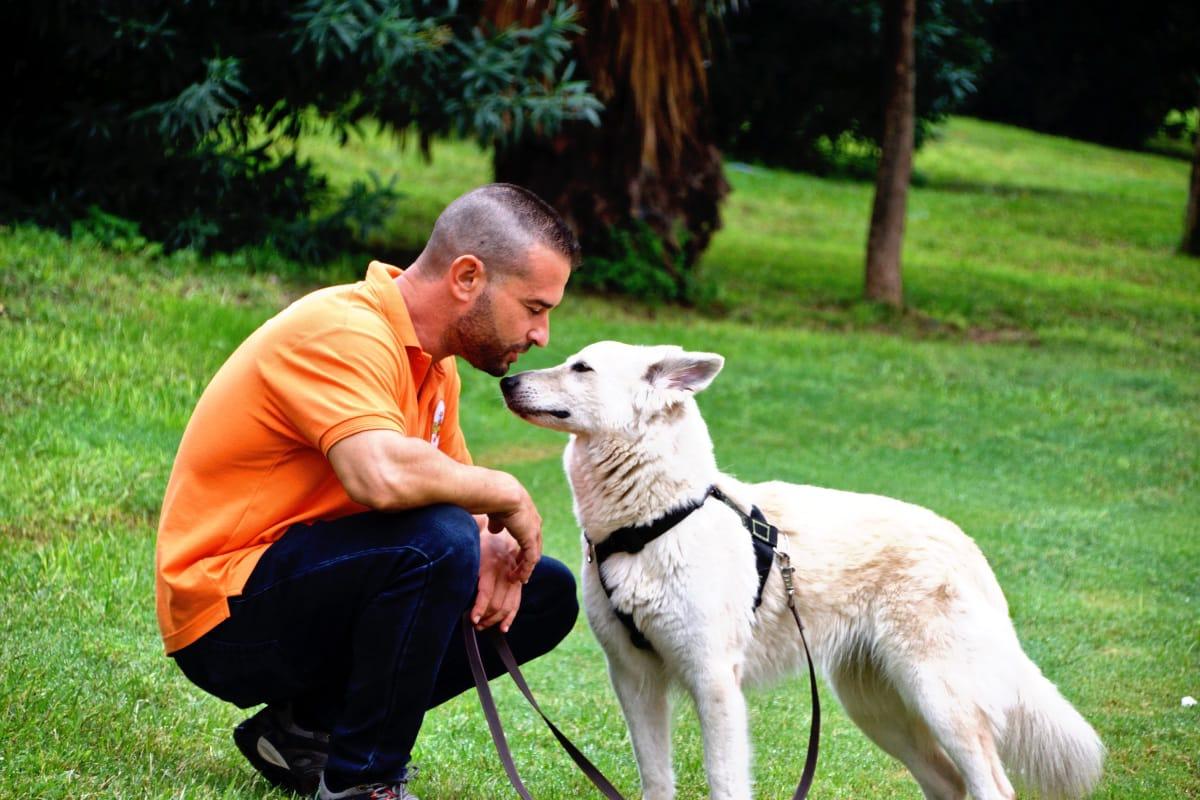 Educador canino a domicilio en Murcia